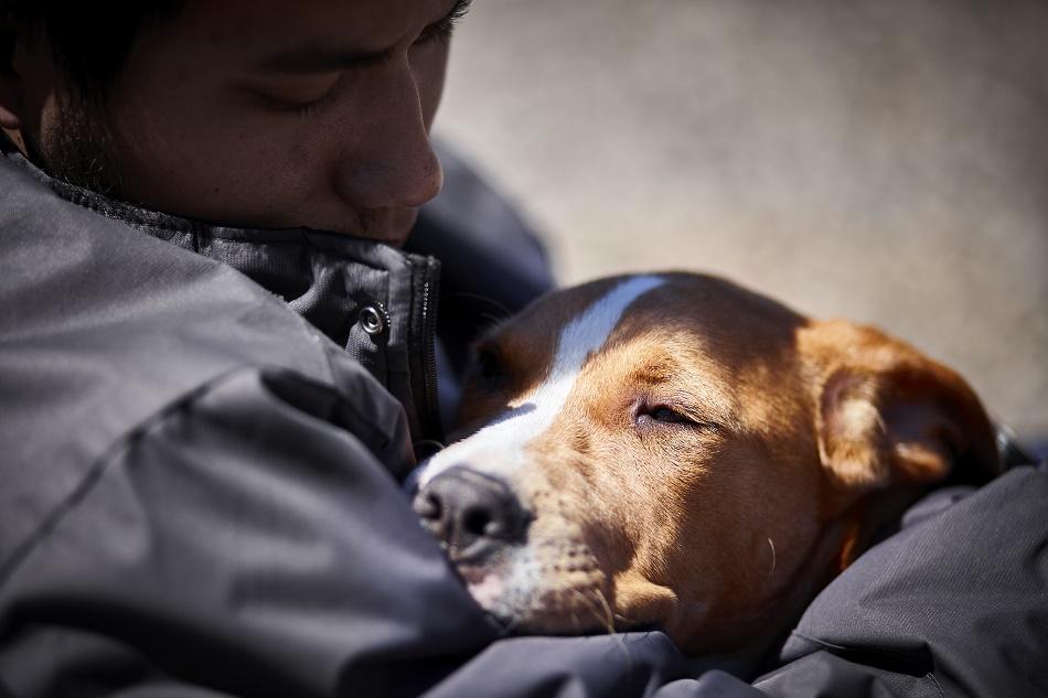 Need Senior Housing Have Dog Emergency